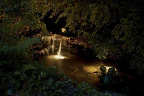 Lovely Garden Pond